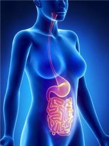 intestin, nature & partage, docteur nature, psyllium blond