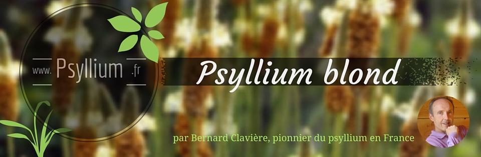 Psyllium blond un cadeau de la nature